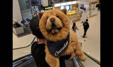 """Cachorro """"urso"""" faz sucesso no Instagram"""